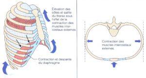 osteopathe noumea en nouvelle calédonie
